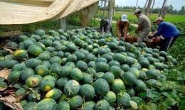 Ưu tiên cao nhất cho lưu thông tiêu thụ nông sản và các sản phẩm nông nghiệp