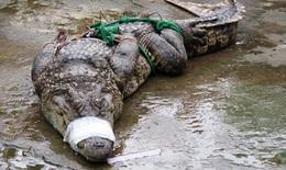 Đồng Nai: Vây bắt cá sấu dài 2m trong khu nước ngập gần nhà