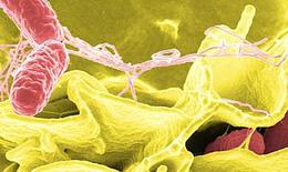 Ngộ độc thức ăn do Salmonela: Nhận biết và xử trí?