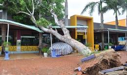 Cây xanh ngã đổ, nhà tốc mái sau bão Sinlaku