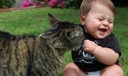 Video hài: Mèo yêu bé sơ sinh