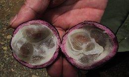 Ngộ độc Hồng Trâu, 3 em học sinh tử vong