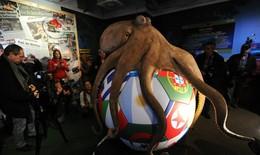 """Chuyện sử dụng động vật dự đoán World Cup: Đâu dễ có """"thánh"""" Paul"""