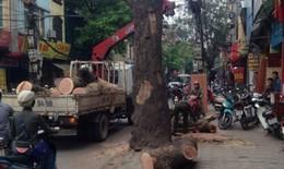Chủ tịch TP Hà Nội yêu cầu tiếp tục chặt hạ, thay thế cây xanh