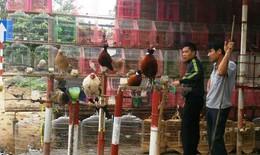 Chim hoang dã được bày bán công khai ở vùng dịch cúm A/H5N6