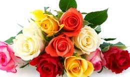 Ý nghĩa tình yêu của mỗi loại hoa hồng dành cho nàng