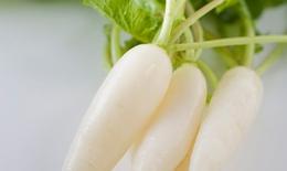 Củ cải trắng trị bệnh đường hô hấp