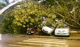 1 người chết, 120 cây xanh bật gốc trong trận mưa giông tại Hà Nội