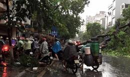 Hà Nội: Mưa giông khủng khiếp, cây đổ ngổn ngang
