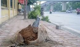 Dông lốc kinh hoàng vô tình tố vụ chặt cây Hà Nội