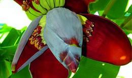 Bài thuốc chữa bệnh từ hoa chuối