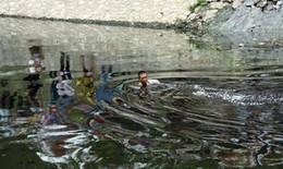Bị truy bắt, người đàn ông nhảy xuống sông Tô Lịch