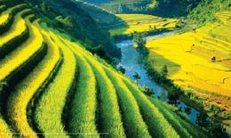 Việt Nam giành vị trí số 1 xuất khẩu gạo thế giới