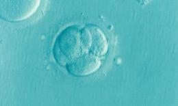 Lần đầu tiên chỉnh sửa ADN trong phôi thai người