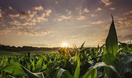 Lá sinh học hỗ trợ nông dân nghèo
