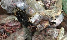Phát hiện hơn 2 tạ thịt chim các loại đã bốc mùi