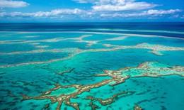 Đại dương tạo ra 50% lượng oxy cho chúng ta