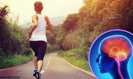 Khi ngừng tập thể dục, não bộ thay đổi thế nào?
