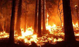 Ô nhiễm bụi mịn PM2.5 do cháy rừng ảnh hưởng sức khỏe người dân Australia