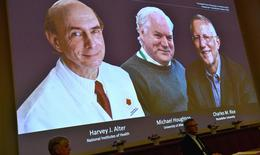 Nobel Y học 2020 trao cho 3 nhà khoa học phát hiện ra virus viêm gan C