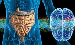 Ruột - Não bộ thứ hai của con người