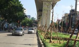 Giám đốc Cty cây xanh lên tiếng về việc trồng cây dưới đường sắt đô thị