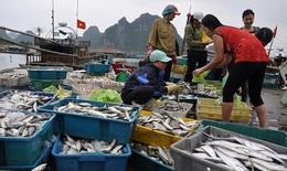 Tiền bồi thường cho ngư dân miền Trung sẽ được trả như thế nào?