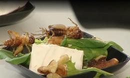 Côn trùng –  giải pháp cho vấn đề thiếu lương thực trong tương lai
