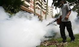 Singapore: Số ca sốt xuất huyết tăng gấp 4 lần