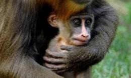 Chuyện vui về khỉ