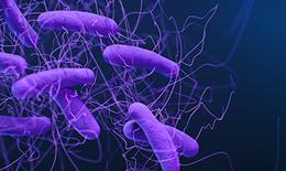 Thuốc trị bệnh gan mật có khả năng diệt khuẩn Clostridioides difficile