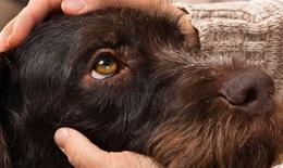 Cảnh giác với bệnh lây nhiễm từ thú cưng