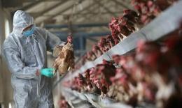 Phòng chống cúm A(H5N1): Không giật title với nội dung không đúng bản chất sự việc