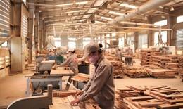 Chống phá rừng ngay tại... xưởng chế biến gỗ