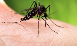 Giun chỉ bạch huyết: Căn bệnh không khác gì sốt xuất huyết