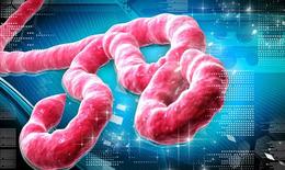 Cẩn trọng  với sát thủ Ebola