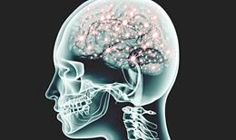 Những hiệu ứng kỳ lạ của nấm ma thuật lên não người