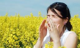 Phòng và trị viêm mũi dị ứng