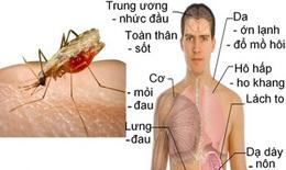 Nhận biết các thể gây nhiễm và điều trị sốt rét