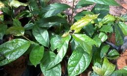 Những loài thảo dược tốt cho người huyết áp cao