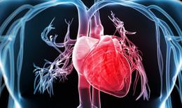 Không dùng Triprolidine khi có bệnh lý tim mạch