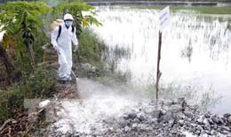 Ổ dịch cúm A/H5N1 tại Bạc Liêu: Tiêu trùng khử độc, xử lý triệt để tránh lây sang người