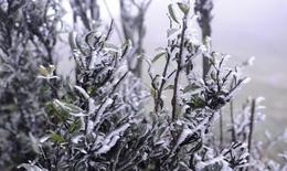 Rét đậm kéo dài sang tuần sau, vùng núi cao -3 độ C