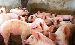 Lập Ban chỉ đạo quốc gia phòng, chống dịch bệnh Dịch tả lợn Châu Phi