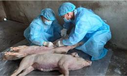 Hà Nội: Bổ sung 202 tấn hóa chất và 6.721 tấn vôi bột phòng chống dịch tả lợn châu Phi