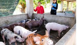 Hà Nội: 76 xã, phường đã qua 30 ngày không phát sinh bệnh dịch tả lợn châu Phi