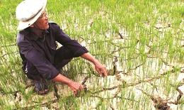 Thiếu nước nghiêm trọng, Bộ NN-PTNT kiến nghị khẩn cấp xây dựng kế hoạch phòng chống hạn hán