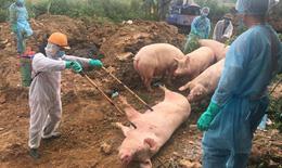 Hà Nội: Giám sát chất lượng môi trường tại nơi chôn lấp lợn mắc dịch tả Châu Phi