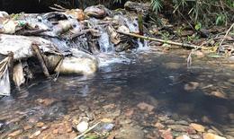 Hàm lượng Styren trong nước sông Đà vượt giới hạn, Hà Nội khuyến cáo không nên uống