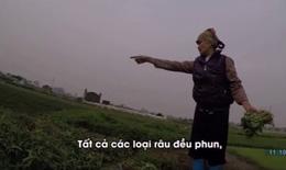 Rau xanh trồng trên mộ ở Hà Nội có thể nhiễm khuẩn